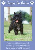 "Cairn Terrier-Happy Birthday - ""I'm Adopted"" Theme"